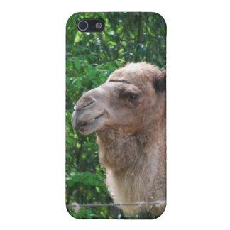 Caso del iPhone 4 del diseño de la foto del camell iPhone 5 Protector