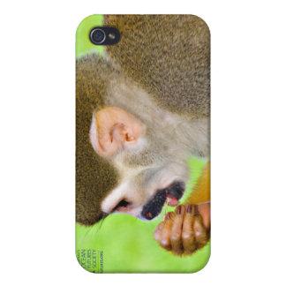 Caso del iPhone 4 del mono de ardilla iPhone 4 Protector