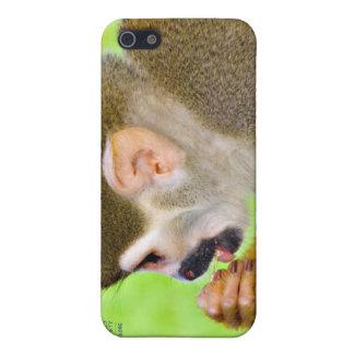 Caso del iPhone 4 del mono de ardilla iPhone 5 Fundas