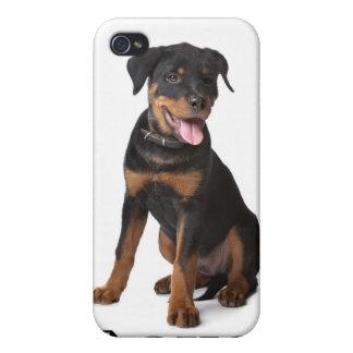 Caso del iPhone 4 del perro de perrito de Rottweil iPhone 4/4S Funda