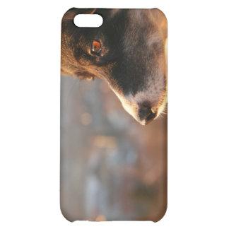 Caso del iPhone 4 del perro del border collie
