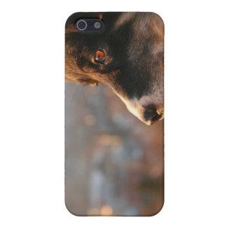 Caso del iPhone 4 del perro del border collie iPhone 5 Fundas