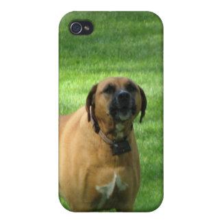 Caso del iPhone 4 del perro del boxeador del desco iPhone 4 Carcasa