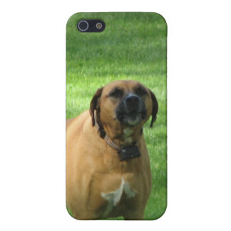 Caso del iPhone 4 del perro del boxeador del desco iPhone 5 Cárcasa