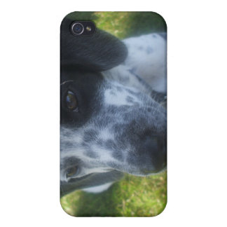 Caso del iPhone 4 del perro del indicador iPhone 4 Protectores