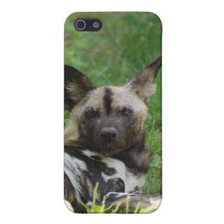 Caso del iPhone 4 del perro salvaje iPhone 5 Cárcasas