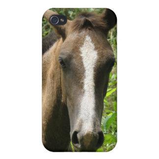 Caso del iPhone 4 del potro del caballo iPhone 4/4S Fundas