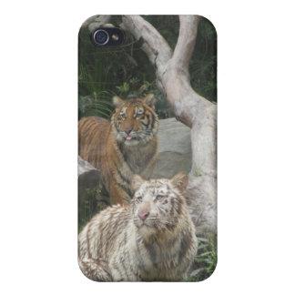 Caso del iPhone 4 del tigre - fotos animales iPhone 4 Funda