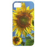 caso del iPhone 5/5s, Barely There iPhone 5 Case-Mate Carcasas