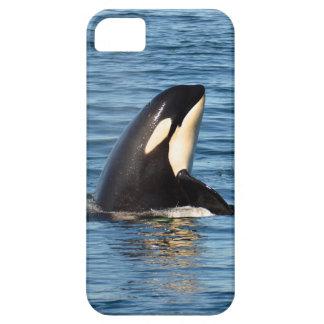 Caso del iPhone 5/5S de Spyhop de la orca K27 Funda Para iPhone SE/5/5s