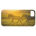 caso del iphone 5 - caso del iphone 5 del caballo iPhone 5 cobertura
