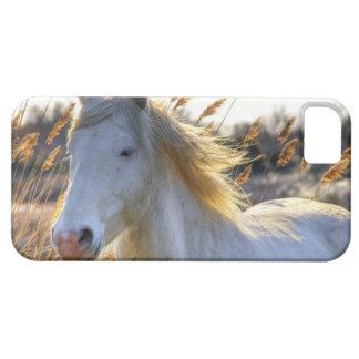 caso del iPhone 5 con el caballo blanco hermoso iPhone 5 Protector