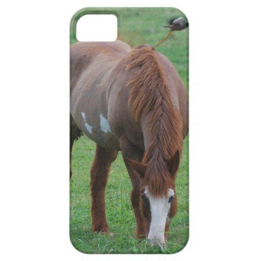 caso del iPhone 5 con el caballo y el pájaro iPhone 5 Fundas