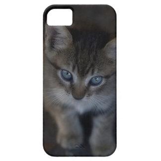 caso del iPhone 5 con el gatito minúsculo que mira iPhone 5 Funda