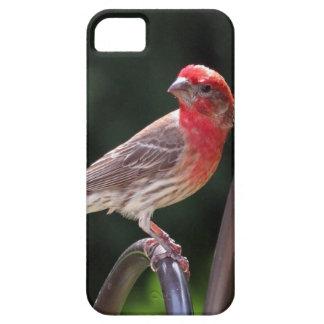 caso del iPhone 5 con el pinzón principal rojo iPhone 5 Funda