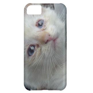 caso del iPhone 5 con el primer de la cara del gat Funda Para iPhone 5C