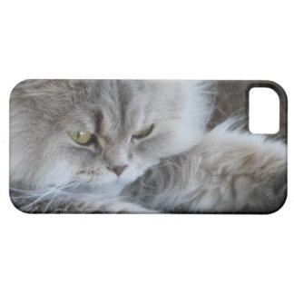 caso del iPhone 5 con la imagen gruñona del gato Funda Para iPhone SE/5/5s