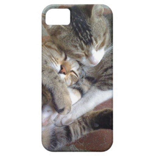 caso del iPhone 5 con los gatitos napping iPhone 5 Funda