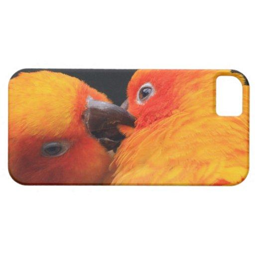 caso del iPhone 5 con los parakeets amarillo-naran iPhone 5 Carcasa