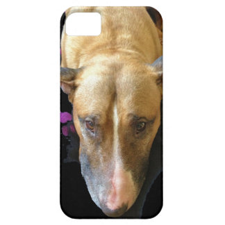 Caso del iPhone 5 de bull terrier del inglés iPhone 5 Case-Mate Cárcasa