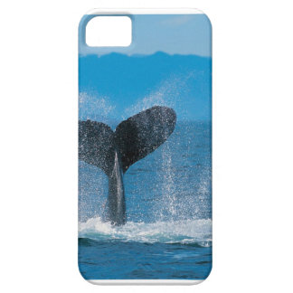 Caso del iphone 5 de la ballena jorobada iPhone 5 Case-Mate protector