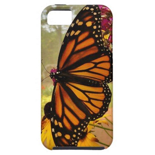 Caso del iPhone 5 de la mariposa de monarca iPhone 5 Cárcasas
