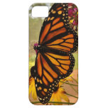 Caso del iPhone 5 de la mariposa de monarca iPhone 5 Case-Mate Cárcasas
