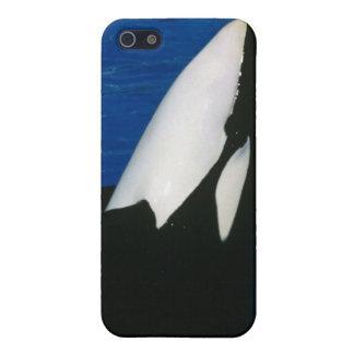 Caso del iPhone 5 de la orca iPhone 5 Fundas