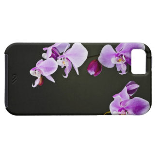 Caso del iPhone 5 de la orquídea iPhone 5 Protectores
