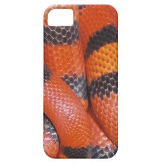 Caso del iPhone 5 de la serpiente de leche del iPhone 5 Funda