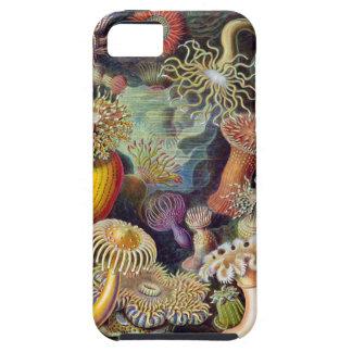 Caso del iPhone 5 de las anémonas de mar de iPhone 5 Funda