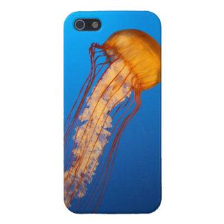 Caso del iPhone 5 de las medusas iPhone 5 Fundas