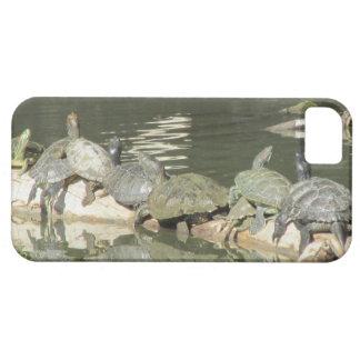 Caso del iPhone 5 de las tortugas iPhone 5 Carcasas