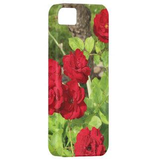 Caso del iPhone 5 de los rosas rojos iPhone 5 Case-Mate Protector