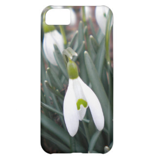 Caso del iPhone 5 de Snowdrop (Galanthus Nivalis) Carcasa Para iPhone 5C