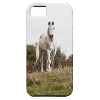 Caso del iPhone 5 del caballo blanco iPhone 5 Case-Mate Protectores
