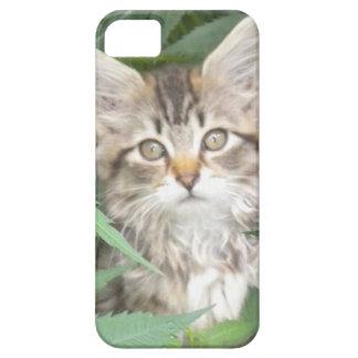 Caso del iPhone 5 del gatito del Tabby Funda Para iPhone SE/5/5s