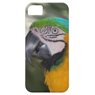 Caso del iPhone 5 del loro del Macaw del azul y de iPhone 5 Protectores