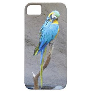 Caso del iPhone 5 del loro del Macaw iPhone 5 Case-Mate Carcasa