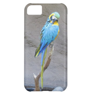 Caso del iPhone 5 del loro del Macaw