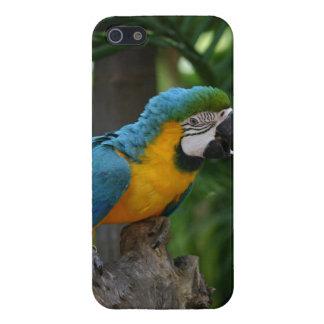 Caso del iPhone 5 del loro del Macaw iPhone 5 Fundas