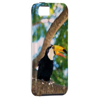 Caso del iPhone 5 del pájaro de Toucan iPhone 5 Cárcasa