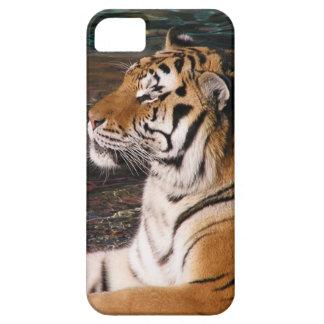 Caso del iPhone 5 del retrato del tigre iPhone 5 Carcasas