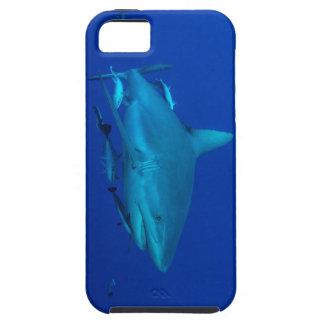 Caso del iPhone 5 del tiburón del filón iPhone 5 Cárcasa