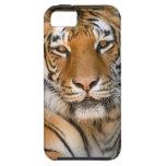 Caso del iPhone 5 del tigre de Bengala iPhone 5 Case-Mate Cobertura
