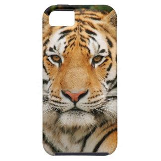 Caso del iPhone 5 del tigre siberiano iPhone 5 Fundas