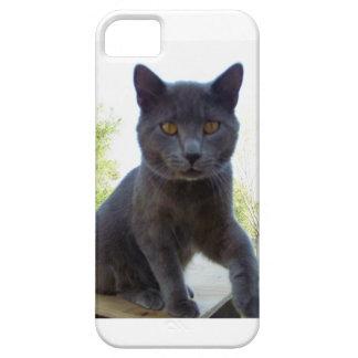 caso del iPHONE 5. Tiene foto linda del gato en él Funda Para iPhone 5 Barely There