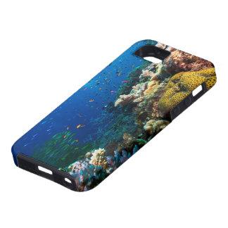 Caso del iPhone 5S del mar de coral iPhone 5 Case-Mate Carcasas