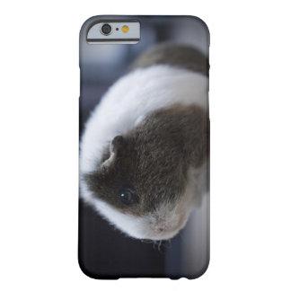 caso del iPhone 6 con el conejillo de Indias lindo