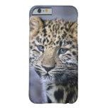 Caso del iPhone 6 de Cub del leopardo Funda De iPhone 6 Barely There